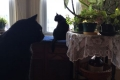 Bruce Cats